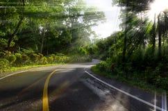 Härlig väg till och med skogen med lekmanna- ljus Arkivbild