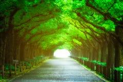 Härlig vägbana under trädbågetunnelen Royaltyfri Bild