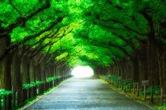 Härlig vägbana under trädbågetunnelen Royaltyfria Bilder