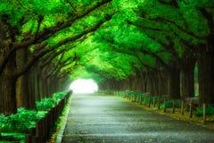 Härlig vägbana under trädbågetunnelen Royaltyfria Foton