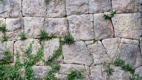 Härlig vägg av den gråa stenen arkivfoton