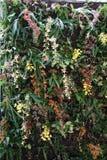 Härlig vägg av färgrika orkidér Royaltyfria Bilder