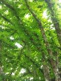Härlig väv av träd Arkivbild