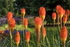 härlig växt Arkivfoto