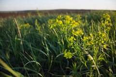 härlig växt bland gräset i ett fält i sommar royaltyfria bilder