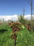 Härlig växt i gräsplan Royaltyfria Bilder