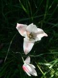 Härlig växt i gräsplan Arkivbilder