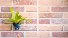 Härlig växtgarnering som hänger på väggen Royaltyfria Foton
