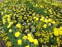 Härlig växtinstallation för illustrationliggande för design hög upplösning för täppa för plan Arkivbilder