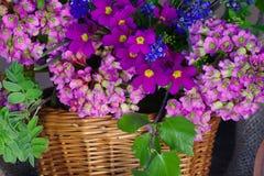 Härlig vår, blommor i korgen Arkivfoto