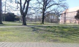 Härlig vår i Winsen, träd och blommor Arkivfoton