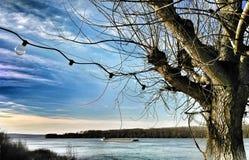 Härlig vårdag i Serbien Donau flod, Vojvodina solig dag Arkivbild