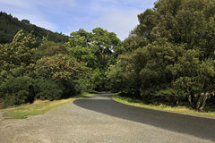 Härlig vandringsled i nationella Wicklow berg Arkivfoton