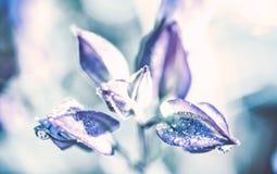 Härlig vattendroppe på blåa kronblad, toppen makro Arkivfoto
