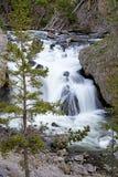 Härlig vattenfall i den Yellowstone nationalparken Arkivbilder