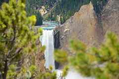 Härlig vattenfall i den Yellowstone nationalparken arkivfoton