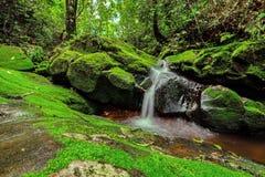 Härlig vattenfall i grön skog i djungel på Phu Soi Dao mou Arkivbild