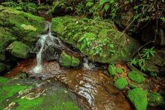 Härlig vattenfall i grön skog i djungel på Phu Soi Dao mou Royaltyfri Foto