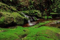 Härlig vattenfall i grön skog i djungel på Phu Soi Dao mou Royaltyfria Foton