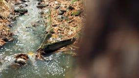 Härlig vattenfall i rörelse för förskjutning för djungelskog video lager videofilmer