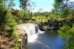 Härlig vattenfall med grönska i Nya Zeeland arkivfoton