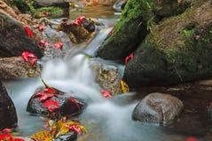 Härlig vattenfall och röda lönnlöv Arkivbild