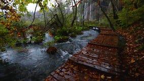 Härlig vattenfall, sjöar och höstskog i den Plitvice nationalparken, Kroatien lager videofilmer