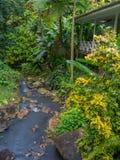 Härlig vattenfallflod på StLucias botanisk trädgård arkivbild