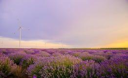 Härlig vibrerande solnedgång över ett lavendelfält med vindturbinen Arkivbild
