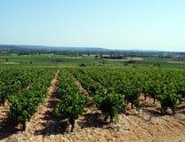 härlig vingård Arkivbilder