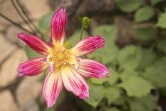 Härlig vinkel för bästa sikt för blomma med kopieringsutrymme Arkivfoto