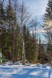 Härlig vinter Arkivbilder