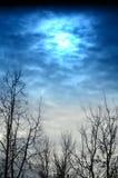 Härlig vinterhimmel och träd Arkivbild