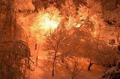 Härlig vinternatt i en parkera arkivfoto