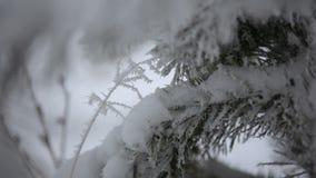 Härlig vinterrimfrost på filialen lager videofilmer