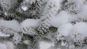 Härlig vinterrimfrost på filialen stock video