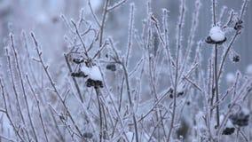 Härlig vinterrimfrost på filialen arkivfilmer