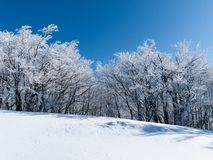 Härlig vinterskog arkivfoton