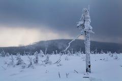 Härlig vinterskog av Beskid Slaski Arkivbilder