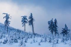 Härlig vinterskog av Beskid Slaski Royaltyfri Fotografi