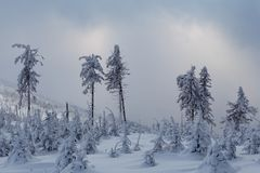 Härlig vinterskog av Beskid Slaski Arkivfoton