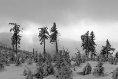Härlig vinterskog av Beskid Slaski Royaltyfria Foton