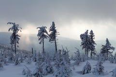 Härlig vinterskog av Beskid Slaski Royaltyfri Foto