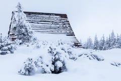 Härlig vinterskog av Beskid Slaski Arkivfoto