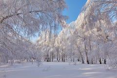 Härlig vinterskog - ett foto 13 Arkivfoto