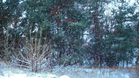 Härlig vinterskog i snön lager videofilmer