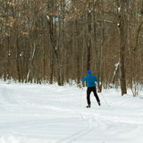 Härlig vinterskog och skidåkare i en blå dräkt Royaltyfria Bilder