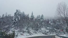 Härlig vinterskog och snönedgång Arkivbild