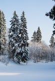Härlig vinterskog på bakgrunden av blå himmel Arkivfoton