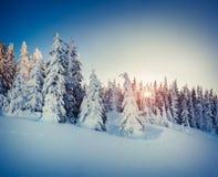 Härlig vintersoluppgång i bergen Royaltyfria Bilder